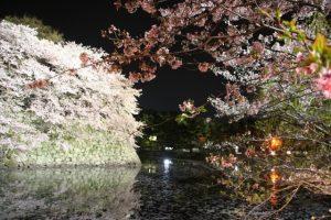 彦根城桜祭り
