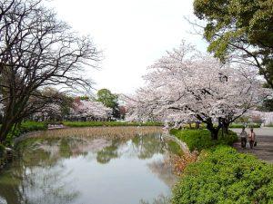 春の名城公園
